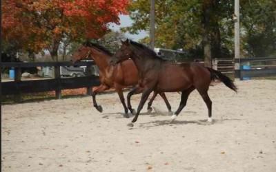 Equine Veterinary Service Illinois