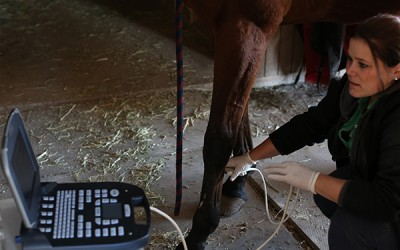 Specialty Care from Lukas Equine