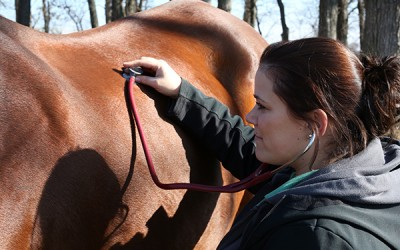 Equine Veterinary Medical Service Illinois