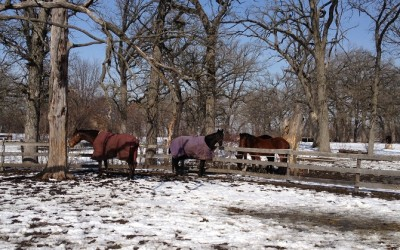 Winter Is Coming: Tips for Winter Horse Care